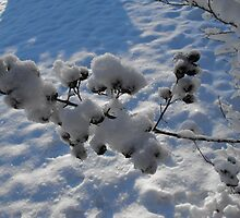 Snow on the Crepe Myrtle Berries by WhiteOaksArt