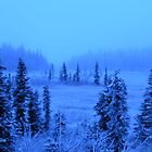 Spruce Trees in Ice Fog by Annalee Blysse