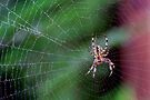 Spider In A Misty Web by Gene Walls