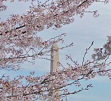 Cherry Blossom #5 by dimpdhab