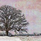 Oak Tree in Field by Joselyn Holcombe