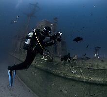 Underwater photographer takes photos of dusky groupers by spyderdesign