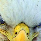 Eagle Eye's  by lanebrain photography