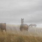 Horses in the Mist by Enivea