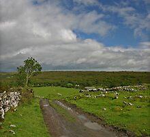 Irish Country Lane by Martina Fagan