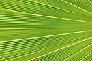 The Palm Highway by Jo Nijenhuis