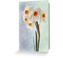 white daffodils Greeting Card