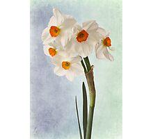 white daffodils Photographic Print