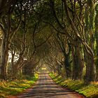 On the long road home by Peter Ellison