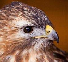Hawk Eye by Lynne Morris