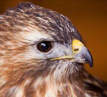 Hawk Eye by Lynne Morris