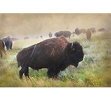 It's Raining Bison Photographic Print
