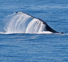 Whales tail by footsiephoto