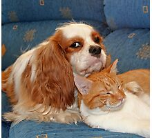dog and cat Photographic Print