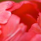 Soft Lips by Ray Clarke
