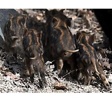wild boar baby behinds Photographic Print