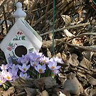 A new home for Spring by John Easterhouse
