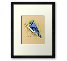 Blue Jay in colored pencil Framed Print