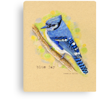 Blue Jay in colored pencil Canvas Print