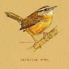 Carolina Wren Bird by Revelle Taillon