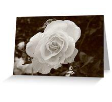 Morning Flowers  Greeting Card
