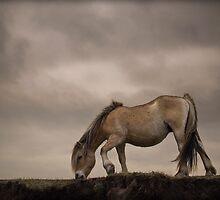 Fjord horse by Henri Ton