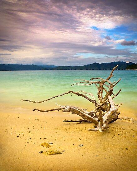 Lake Jocassee Drifter - Driftwood On Beach by Dave Allen