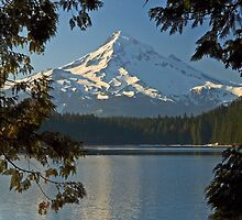 Mount Hood - Through The Trees by USGolfers