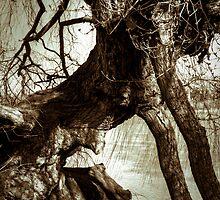 Crouching tree by Eric Waring