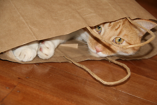cat in a bag by footsiephoto