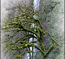 Mossy Tree by Susan Vinson