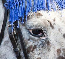 Gli Occhi Del Cavallo Italiano by phil decocco