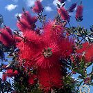 EMPRESS BOTTLE BRUSH by laureen warrington