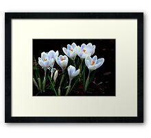 Beautiful (Spring Crocus early April) Framed Print