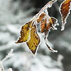 Where Autumn Meets Winter by Photography by James Hoffman