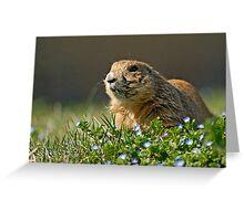 Black-tailed Prairie Dog (Cynomus ludovicianus) Greeting Card