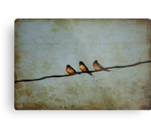 Three On A Wire Metal Print