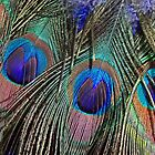 Peacock Feathers I by Elizabeth Hoskinson