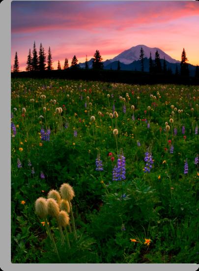Alpine Garden by DawsonImages
