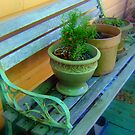 Flower Pots on a Bench by AuntDot