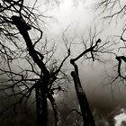 Willow & Sky by JD Dorosiewicz