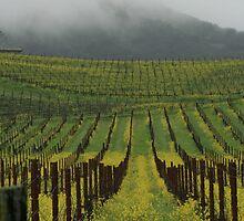 Golden hills of Napa Valley by Aggiegirl