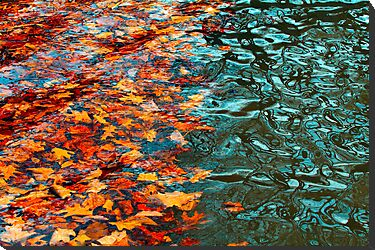 Fall Leaves in the Hudson by Mary Kay Marino