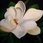 The Magnolia by mhubbard