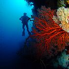 Red Fan, Christmas Island, Australia by Sean Elliott