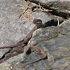 Anole Lizards  by JeffeeArt4u