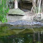 Freshwater Crocodile by Mark Kent