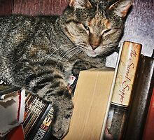 The Well Read Cat by Nadya Johnson
