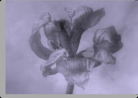 Textured Tulip - JUSTART ©  by JUSTART