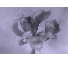 Textured Tulip - JUSTART ©  Photographic Print